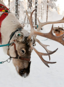 Christmas Reindeer on the background of a winter forest